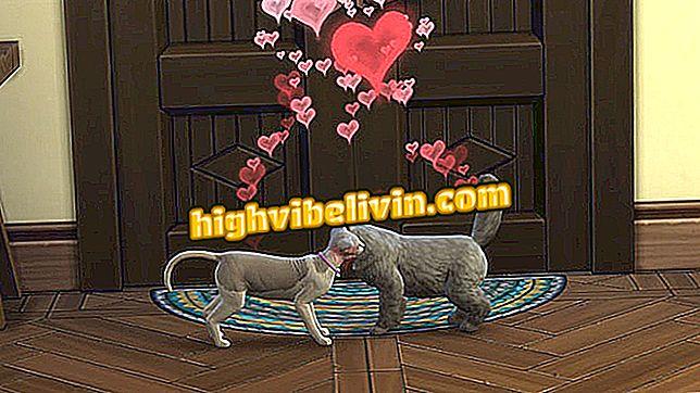 Làm thế nào để có chó con trong Sims 4: Mèo và Chó